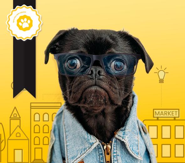 Clases de educación canina avanzada en Málaga