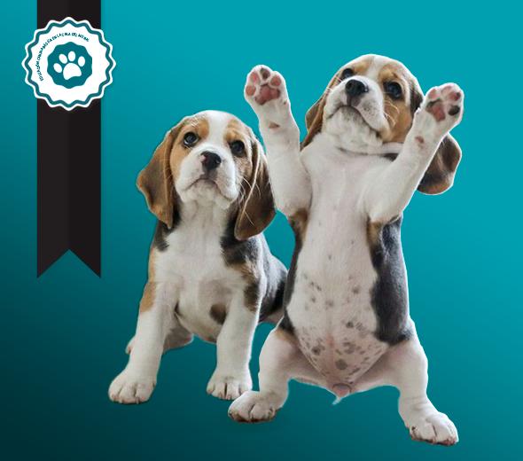 Clases de educación canina especial para cachorros básica en La Cala del Moral, Málaga