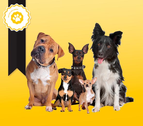 Clases de educación canina grupos