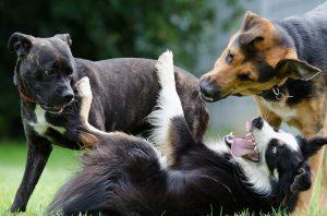 La importancia de tener un perro sociable